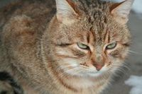 926524_mango_the_cat_2