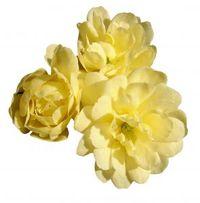 Yellow_banksia_rose_2